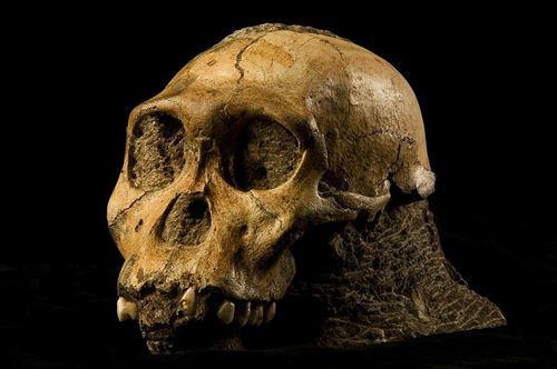 El ni�o de Taung no era humano