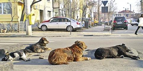 Una sentencia obliga al Centro Canino Internacional a desalojar sus 30 perros de Es Pilar�