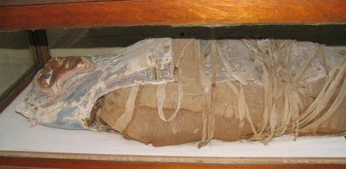 Arque�logos estadounidenses encuentran m�s de un mill�n de momias en un cementerio