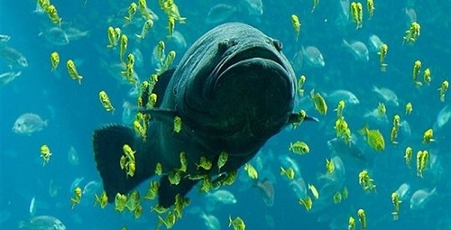 La isla del Toro es el punto de muestreo dentro de una Reserva Marina con más biomasa de las Illes Balears