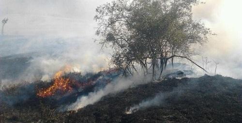 El GOB presenta alegaciones al Plan de defensa contra los incendios forestales
