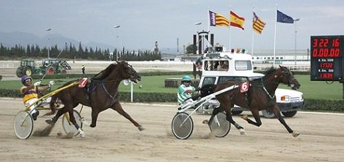 https://www.noticiasmallorca.es/imatges/fotosweb/2014/08/20/7159caballo.jpg