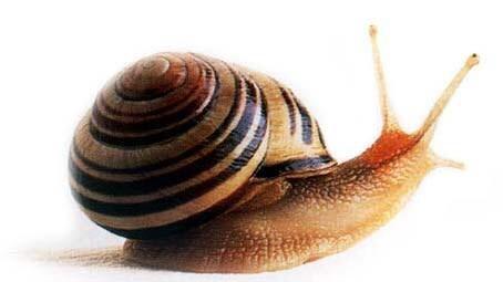 Los caracoles, presentes en la dieta paleol�tica 10.000 a�os antes de lo que se pensaba