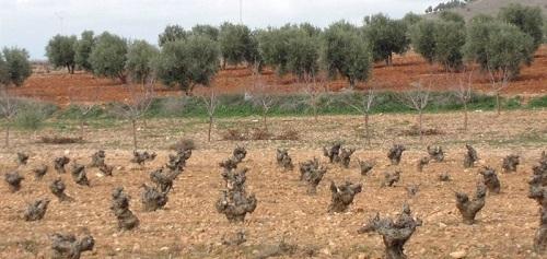El Vi de la Terra Eivissa aument� su comercializaci�n en 2013 en un 12,57% respecto al a�o anterior