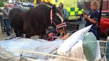 Emotivo reencuentro con su caballo horas antes de morir
