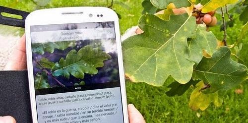 El CSIC lanza una aplicaci�n para identificar �rboles en Pen�nsula y Baleares