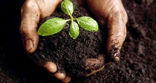 Agricultura reparte 66,3 millones entre las CCAA para programas de desarrollo rural, 300.0000 euros a Baleares