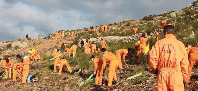 Jornada de reforestaci�n de la campa�a 'Tot(s) per sa Serra!'