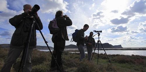 Contabilizan 9.213 aves acu�ticas en s'Albufera y s'Albufereta y 1.758 en Ses Salines