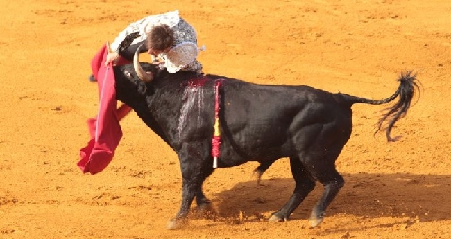 https://www.noticiasmallorca.es/imatges/fotosweb/2015/02/03/5482torero.jpg