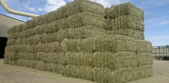 Autorizan una campaña extraordinaria de alfalfa seca para ganado por la sequía agraria