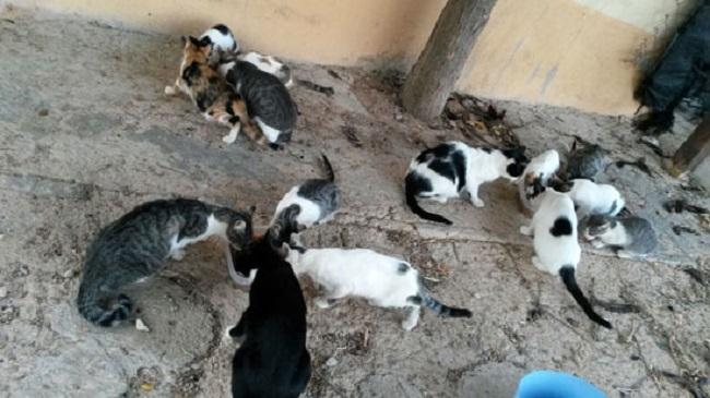 El PP pide al Consell de Mallorca que ayude a los ayuntamientos a pagar el servicio de recogida y gestión de animales domésticos