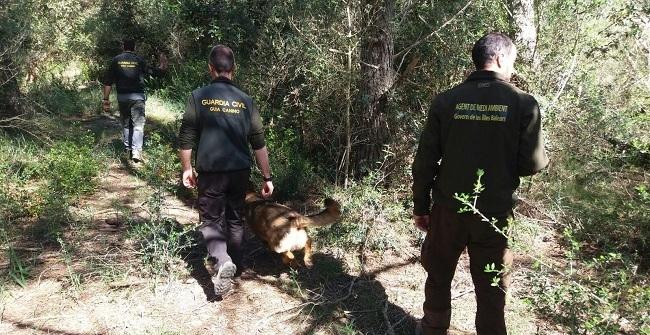 Agentes de Medio Ambiente y Guardia Civil investigan cotos de caza de Menorca en busca de veneno para animales