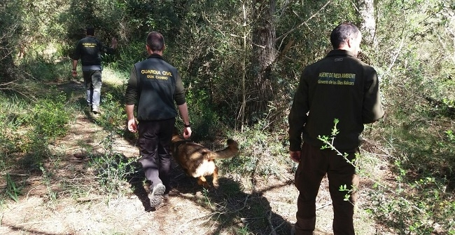 https://www.noticiasmallorca.es/imatges/fotosweb/2017/04/09/6012guardia-agente.jpg