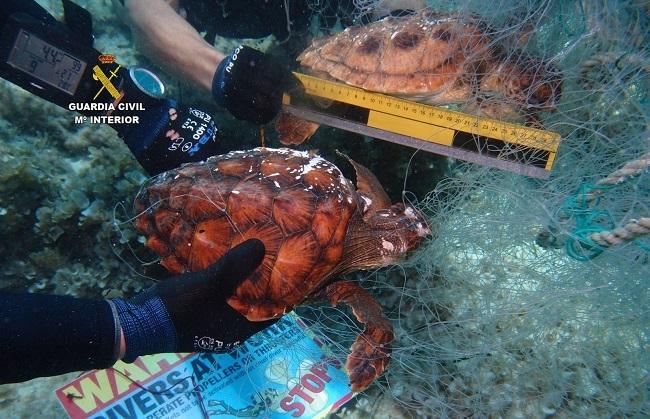 Los GEAS de la Guardia Civil recuperan una red de pesca abandonada con dos tortugas marinas ahogadas