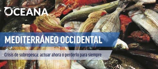 Oceana: la pesca italiana utiliza a un organismo de la Comisión Europea para influir en una decisión del Parlamento sobre el Mediterráneo