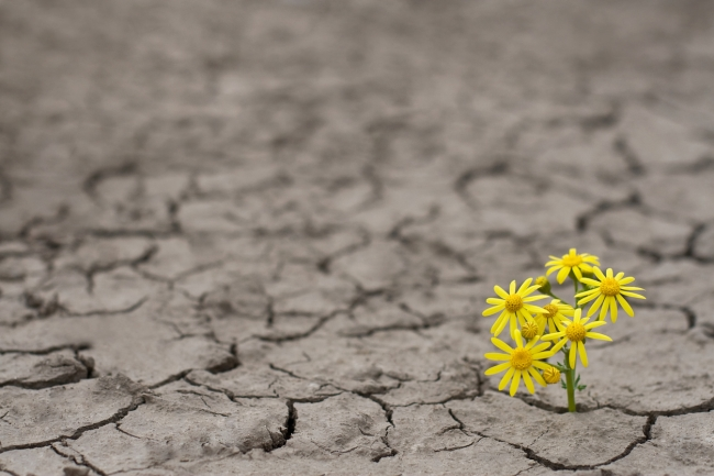 Illes Balears participa a la Cimera de les Nacions Unides sobre el Clima (COP 24) a Katowice