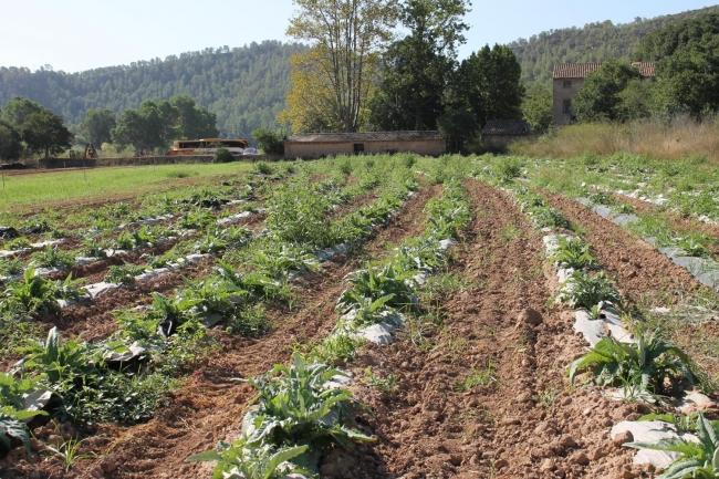 Aprobada la Ley Agraria con el fin de proteger a los agricultores profesionales