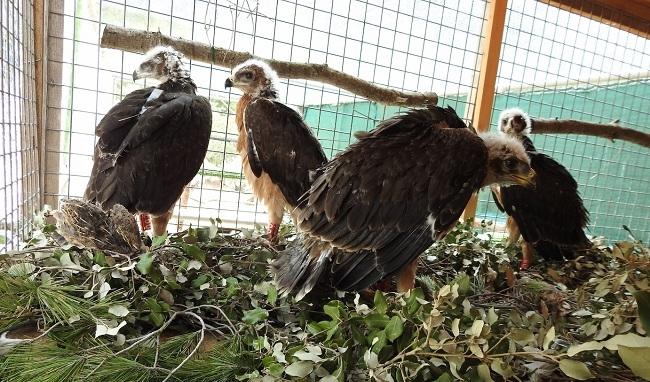 Se pone en marcha un proyecto de plataformas salva pájaros