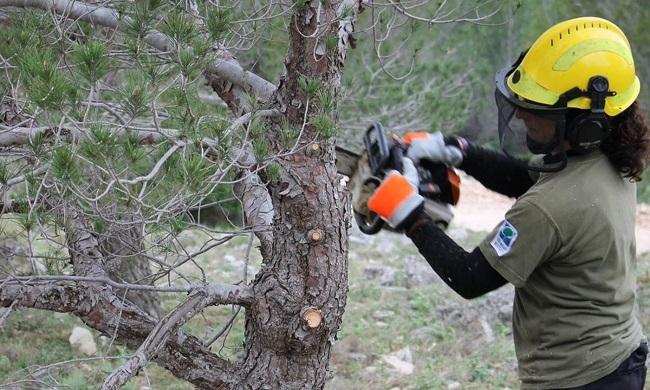 Medio Ambiente ha trabajado 150,26 hectáreas de superficie para la prevención de incendios forestales en 2018