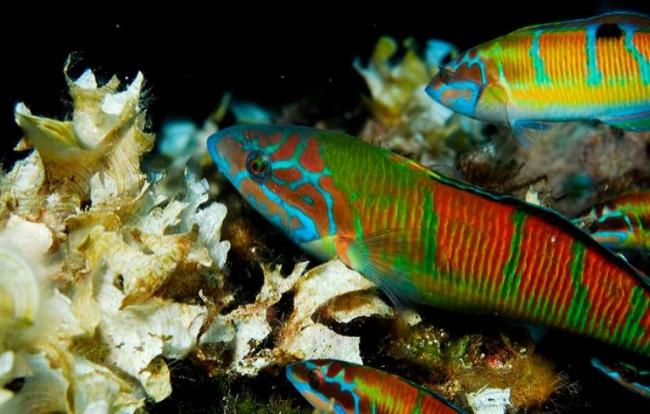 Oceana: España crea en Cabrera el mayor parque nacional marino del Mediterráneo Occidental