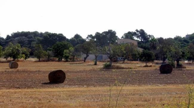 282 agricultores profesionales ya han cobrado las ayudas para el mantenimiento del paisaje agrario