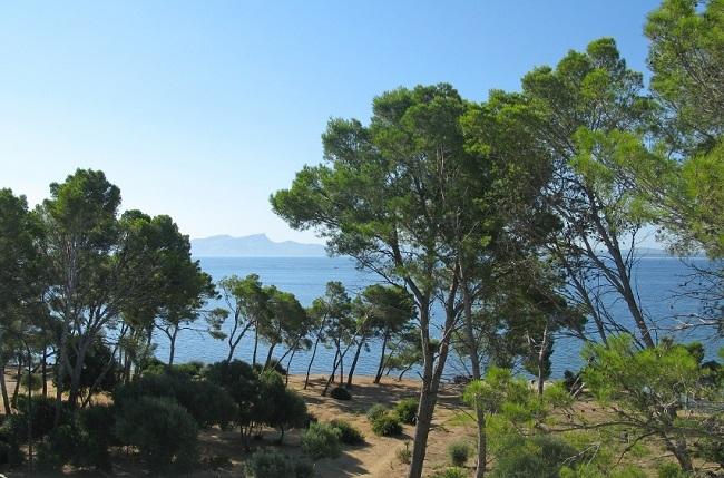 Inversión de 1,6 millones de euros en la prevención, control y seguimiento de plagas y enfermedades en los bosques