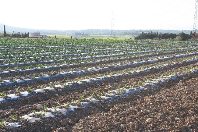 432 nuevos jóvenes agricultores se han incorporado al sector en las Baleares en tres años y medio