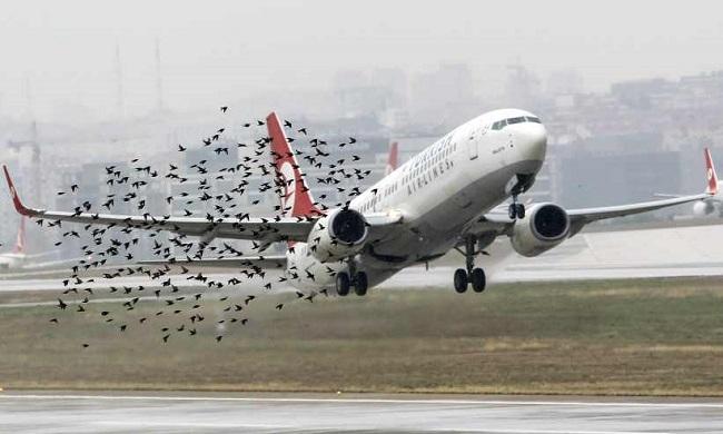 La importancia de los Servicios de Control de Fauna en aeropuertos