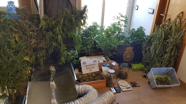 Tres detenidos por cultivar marihuana en Ciutadella