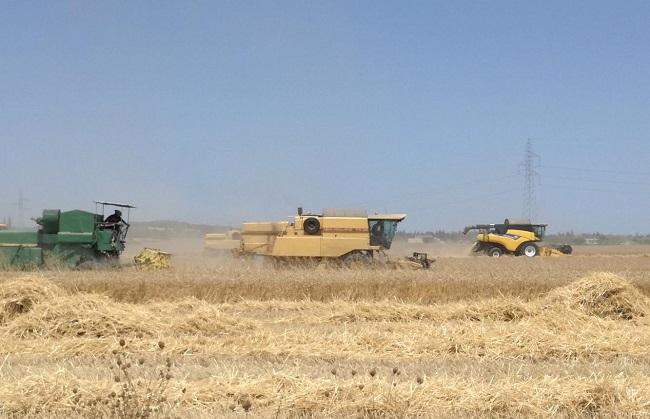 Los agricultores de las Illes Balears reciben dos millones de euros como compensación por la insularidad
