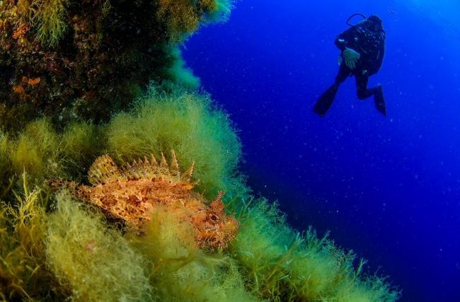 Oceana pide a Italia la protección de un punto caliente de biodiversidad marina en Sicilia