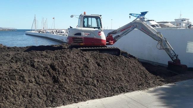 EMAYA retira 535 toneladas de posidonia acumulada en Cala Gamba