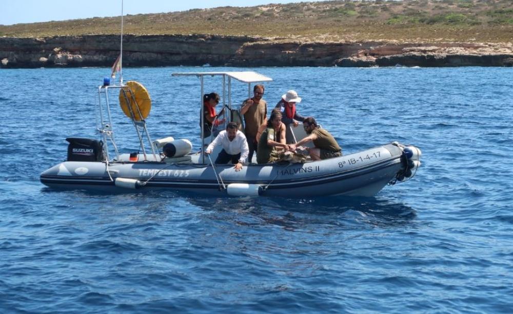 Tres tortugas marinas son liberadas en el Parque Natural de Ses Salines