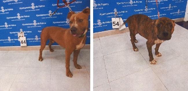 Cort denuncia en Policia Local, Policia Nacional y Seprona el robo de dos perros en Son Reus