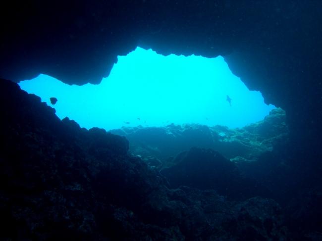 Reserva Marina del Llevant, un destino prioritario para la práctica del buceo en hábitats únicos