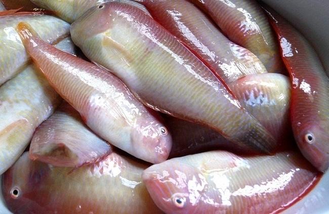 Este domingo 1 de septiembre se abre la veda de la pesca del 'raor'