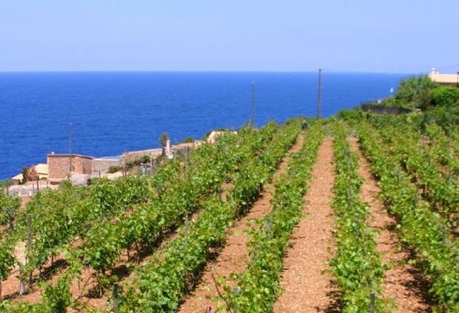Agricultura constituye Mesa del Vino para impulsar el sector vitivinícola de las Islas Baleares