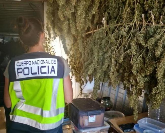 La Policía Nacional de Menorca incauta el mayor alijo de marihuana aprehendido en la Isla que se conoce