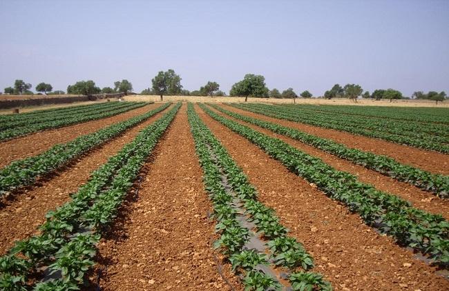 Agricultura destinará más de 3 millones de euros a la incorporación de jóvenes agricultores el 2020