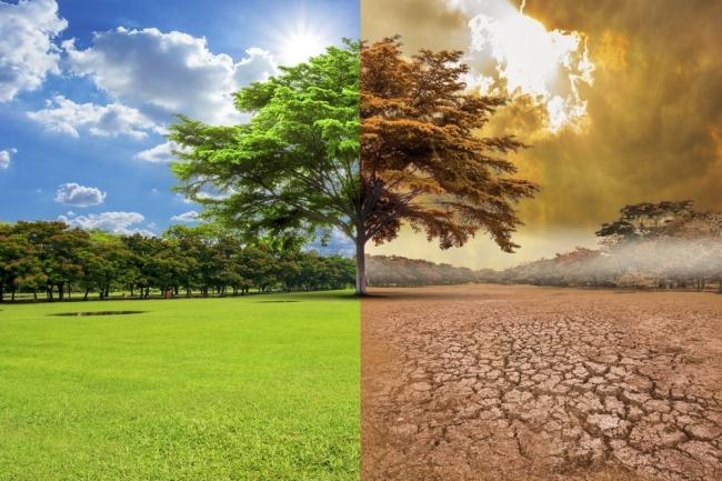 El Gobierno aprobará este año la ley sobre desperdicio alimentario