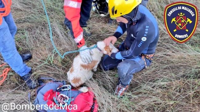 Bomberos de Mallorca rescatan a un perro del interior de un coche precipitado a un torrente