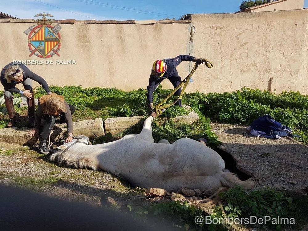 Rescate de un caballo atrapado en un foso