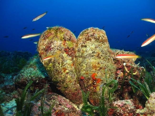 La UICN declara la Nacra en peligro crítico de extinción
