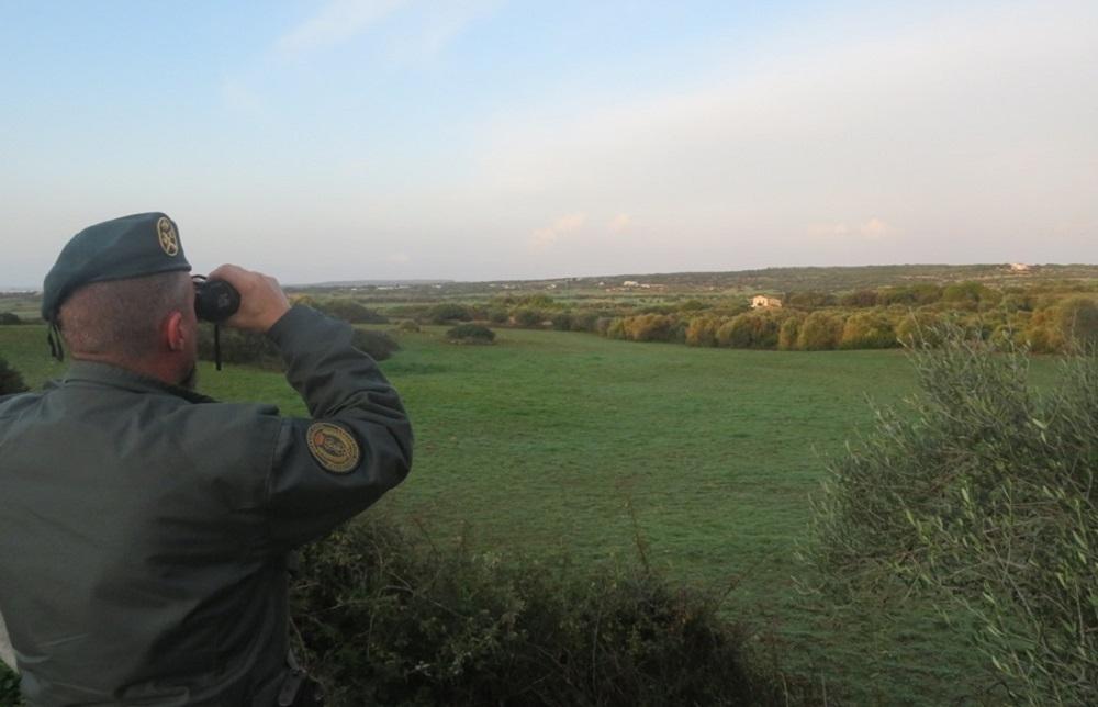 La Guardia Civil recupera 27 fringílidos (jilgueros, canarios, verderoles ) capturados del medio natural en Menorca