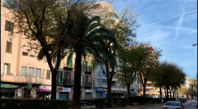 """El PP acusa a Hila de cometer un """"arbicidio"""" en Palma con la tala de más de un centenar de árboles"""