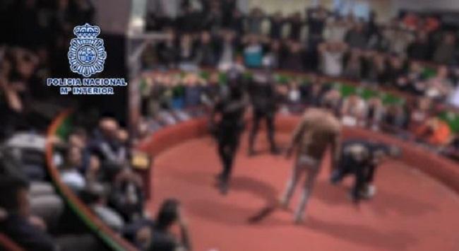 La Policía Nacional interviene en una pelea de gallos con unos 200 participantes, algunos de Baleares