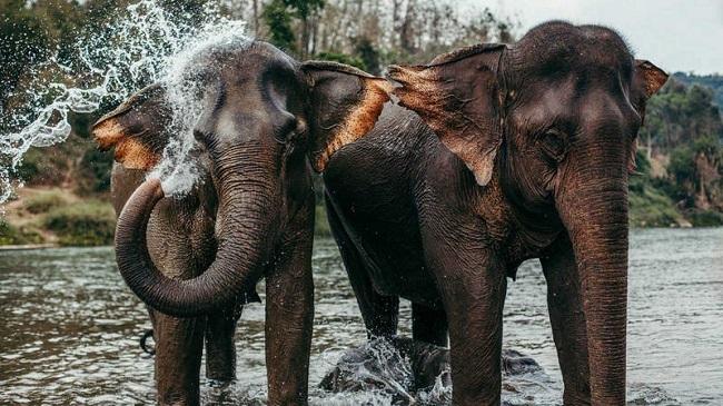 Diez nuevas especies migratorias quedan protegidas bajo el acuerdo mundial de vida silvestre