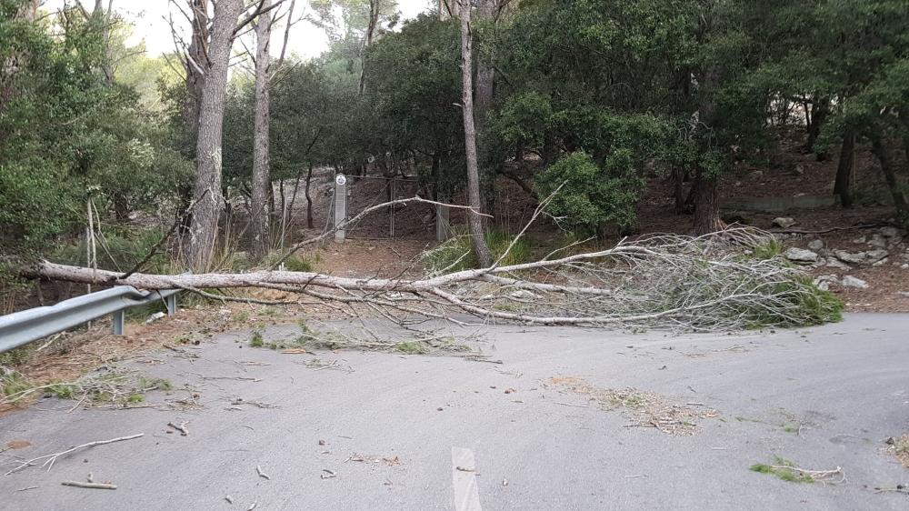 El Consell de Mallorca tramita 30 solicitudes de ayudas a particulares por el tornado