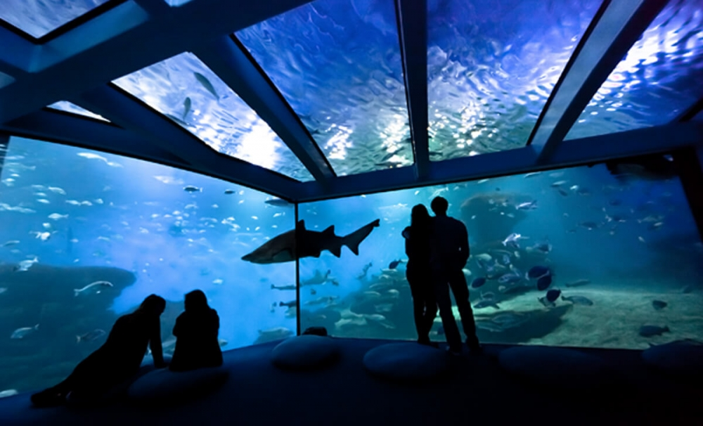 Palma Aquarium acerca los océanos a los hogares a través de las redes sociales